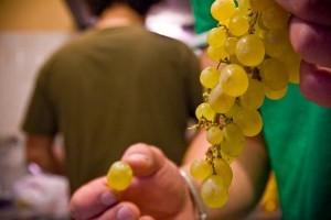 Ritual de fin de año con las uvas